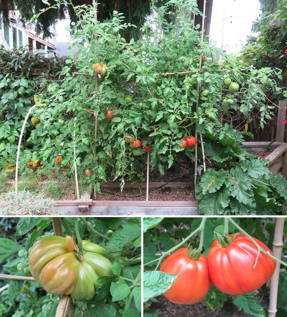 Tomato_8122_Group_1000